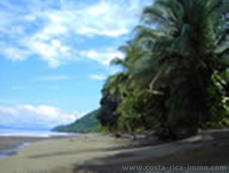 FIRE SALE, JUNGLE BEACH FRONT ADVENTURE LODGE FOR SALE GOLFO DULCE