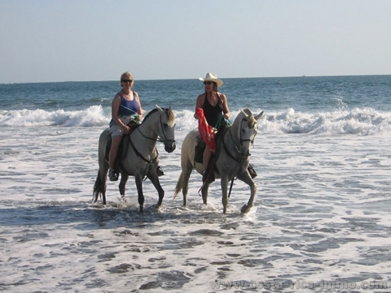 For sale, a well established Horseback-Riding business with private house on the beach Junquillal