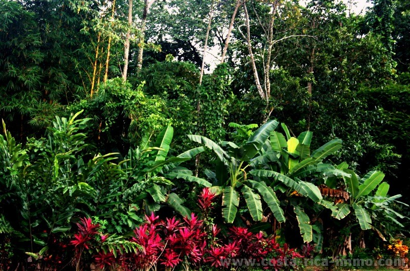 Arenal Rainforest Dorf Zentral Nord Costa Rica Immobilien Bauland Costa Rica Immobilien