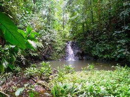 For sale, 24 ha farm near Cahuita, adjoining with river, waterfall, jungle, etc.