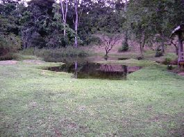 For sale, 202 ha Rain Forest Farm on the Caribbean side of Costa Rica