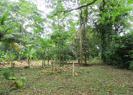 For sale, four beautiful centrally located building plot with a total of 42,000 m2 on the Caribbean