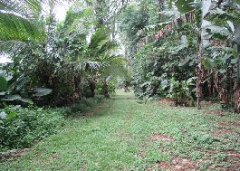 For sale Beautiful centrally located 40.231 m2 of land on the Caribbean