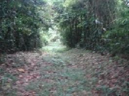 20 ha finca on the outskirts of Cahuita, with impulse flow, waterfalls, forests, pastures, etc.
