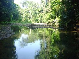 For sale-Finca of 40 ha near Cahuita, with impulse flow, rain forest, pastures, etc.