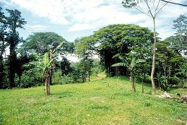 Plot in Cahuita