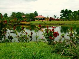 For sale 3 ha farm with lake, wood house, Rancho at Guapiles