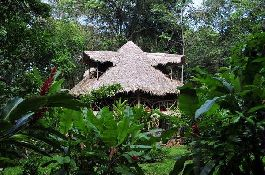 Jungle Hotel For Sale in Puerto Viejo