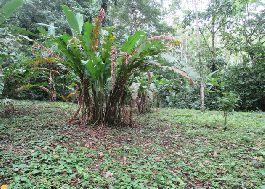 For sale, Top plot near the National Park of Cahuita