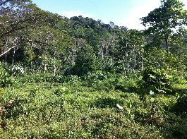 Very nice Farm with 40 ha, with creek offense, waterfall, jungle, pastures at Penshurt