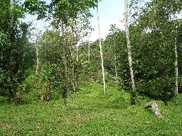 Cahuita 29 ha near the village, with virgin forest, pastures, fruit trees, creeks