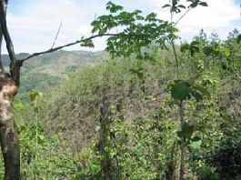 Samara Finca 14 hectares, 7 hectares reforested with teak on the Nicoya Peninsula