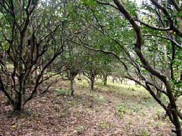Fire sale, 7 ha finca with small range plantation near Las Juntas, Abangares, Guanacaste