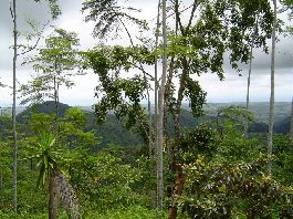 Farm, 71.5 hectares (285 acres) with far-sightedness of the sea and the mountains in Parrita to sell