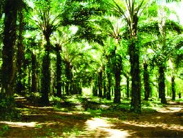 SOLD Sales-Oil Palm Farm