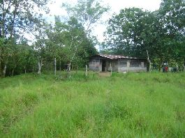 Coto Brus: 15 hectares Finca with pastures, woods and creek