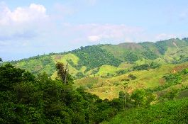 Farm with 23.7 ha, forest, meadows, waterfalls, streams, etc. in the South Pacific