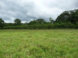 For sale, 10 ha hectares farm practically flat at prime location, near the Panamanian border