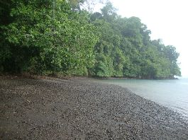 For sale, one of the last pieces of paradise in the Golfo Dulce with private beach and jungle
