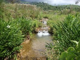 Nature farm with 27.8 acres, with lots of forest and pasture in near Guaycara de Golfito