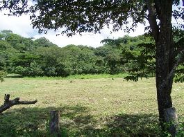 12,000 m2 plot with adjoining at one river, near Tamarindo