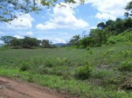 FIRE-SALE Property 2.46 Acres of Land near Tamarindo
