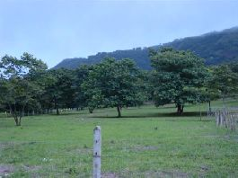 For sale, 20,000 m2 (5 Acres) Incredible Mountain, Valley and Ocean Views, near Playa Grande