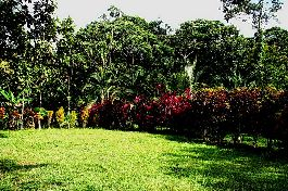 For sale - Arenal Forest Lot 4,996 m2