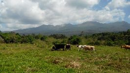 For sale, 7.9 ha cattle farm, at Dos Rios de Upala