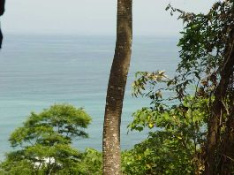 For sale, beautiful 1.2 ha plot with view of the sea at Cabo Blanco-Mall Pais