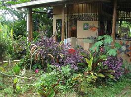 For sale, 6 acre organic farm and reforestation project, San Vito Coto Brus.