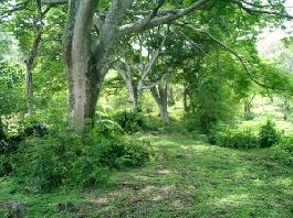 For sale 50,001 m2 plot of land for sale with lot of natur