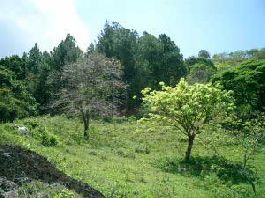 BEST BUY! 10 hectare, 25 acres near Atenas, views, forest, wildlife