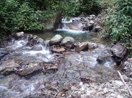 Costa Rica Trout and Avocado Farm for Sale