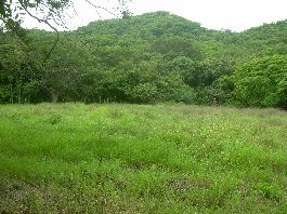 Expat dream in Costa Rica - 42 ha farm near Santa Cruz on the Nicoya Peninsula