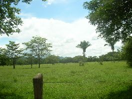 Self catering flat farm with 26 ha, 2 ha large water lagoon on the Nicoya Peninsula in Carmona