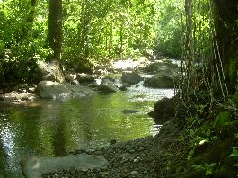 Realize your expat dream in Costa Rica 16 hectare finca at a bargain price, in the mountains on the Nicoya Peninsula