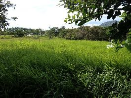 For sale, 44 ha farm with plenty of pasture, stables, etc. in Cañas