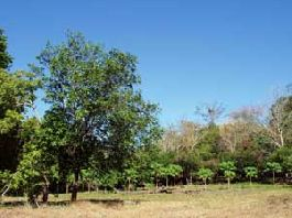 Emigrant property, 7 ha finca with small orange grove in Las Juntas de Abangares