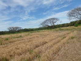 For sale, 110 ha for rice farming, melons, livestock breeding buffalo, etc. in Carmona