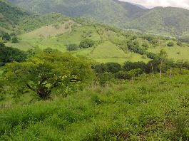 Top offer, 42 ha farm, with house, staff house, pastures, 1.5 ha mangoes, etc. at Jicaral