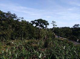 For sale, beautiful 15,492 m2 building plot in nature near Cahuita