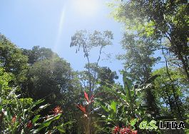 For sale, 25 ha dream property with TITLE !!! Right on the Caribbean, at Gandoca-Manzanillo