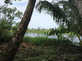 For sale, 1,799 m2 Caribbean beach plot at Rio Bananito
