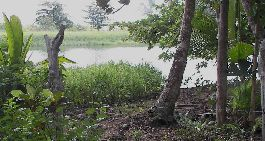 For sale, Caribbean beach and river Plot at Rio Bananito