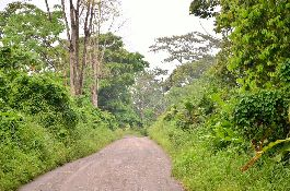 Plot/s in Cahuita, for sale