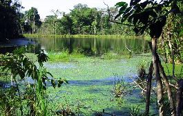 Best deal, Jungle farm with 202 ha on the Caribbean for sale