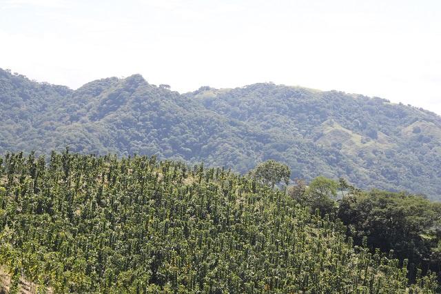 Teak Plantation Farm With 34 4 Ha For Sale At Guanacaste
